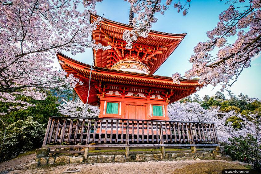 Thông báo mở lớp đào tạo Ứng viên Y sỹ, Điều dưỡng làm việt tại Nhật Bản